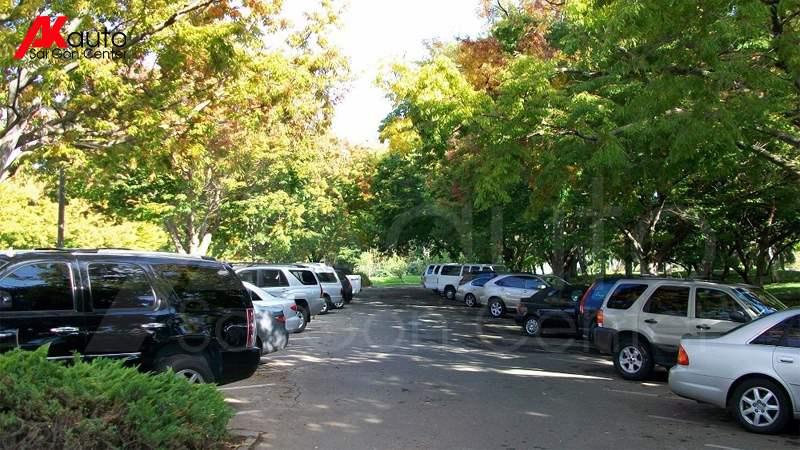đỗ xe dưới bóng cây chống nóng